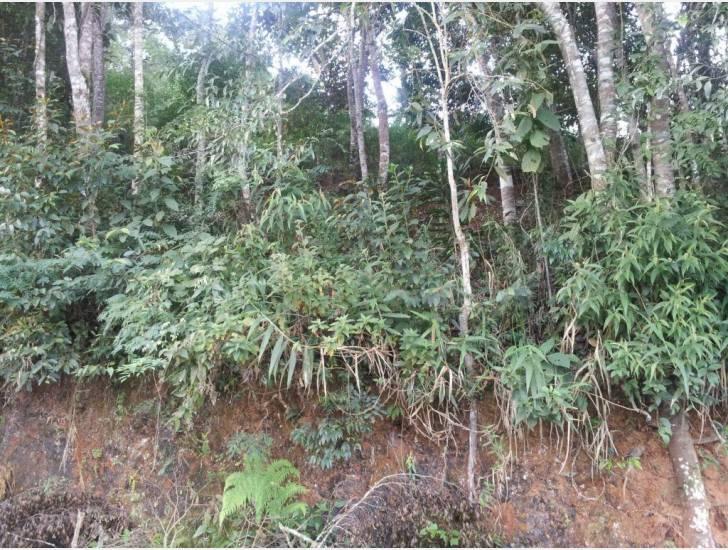 Terreno Residencial à venda em Parque do Imbui, Teresópolis - RJ - Foto 3