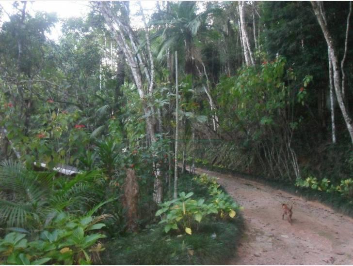 Fazenda / Sítio à venda em Motas, Teresópolis - RJ - Foto 44